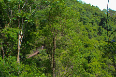 can you find her? (Marcelo J O) Tags: trees forest rainforest rope walkway jungle brazilian