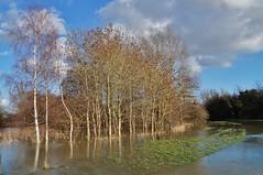 Flooded stand. (dlanor smada) Tags: trees flooding chilterns aylesbury bucks floods floods070214