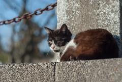 cat (taro_taro_imo) Tags: cat nakatsu oita helios442 k200d