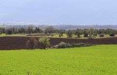 midday bright green (Simos1968) Tags: field twotrees springtime