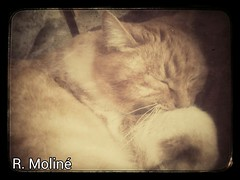 Lilith duerme. (edea44) Tags: cat chat gato gata flickrandroidapp:filter=none