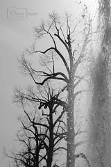 Elixir Of Life (Undertable) Tags: life blackandwhite bw tree water fountain monochrome garden spring wasser springbrunnen brunnen sw schwarzweiss bäume baum elixir frühling treees fontäne kurpark undertable badmergentheim spagarden spagardens assamstadt oliverbauer grewingup