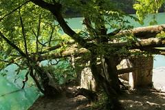 Rhne ( Fluss River ) im Kanton Genf in der Schweiz (chrchr_75) Tags: river schweiz switzerland suisse swiss rhne mai christoph svizzera fluss rhone 2014 1405 suissa chrigu chrchr hurni chrchr75 chriguhurni kantongenf chriguhurnibluemailch mai2014 albumrhnegenfcancy hurni140505 albumrhne albumrhneflussriver