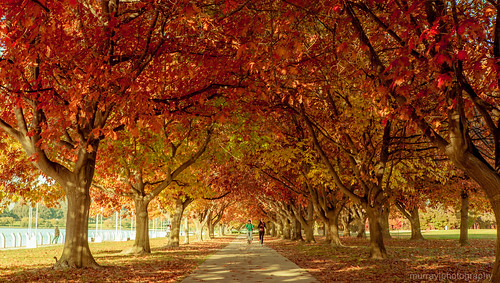 Autumn in Canberra