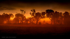 Dust storm, South Australia (Robert Lang Photography) Tags: ranch trees light storm colour nature weather rural south stock australian australia nopeople erosion agriculture aussie dust duststorm southaustralia ep eyre soilerosion wildweather burntsoil agribusiness farmingpractices eyrepeninsula coomunga