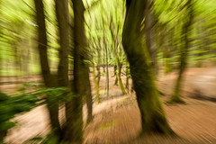 dansende bomen (beta karel) Tags: trees brown green forest dancing boom dans nops cameratrick 2014 ©betakarel dansendebomen