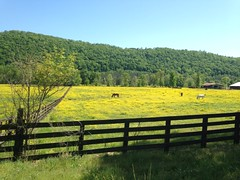 They Call it Alabama the Beautiful for a Reason (The Goat Whisperer) Tags: horses yellow alabama varmints