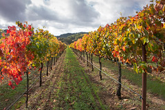 Some Old wine Country Pix #14 (Tom Moyer Photography) Tags: california vineyard vines napavalley winecountry napacounty