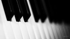 Songs in the key of life (Angelo Trapani) Tags: note musica bianco nero vita steviewonder tasti tastiera pianoforte chiave canzoni