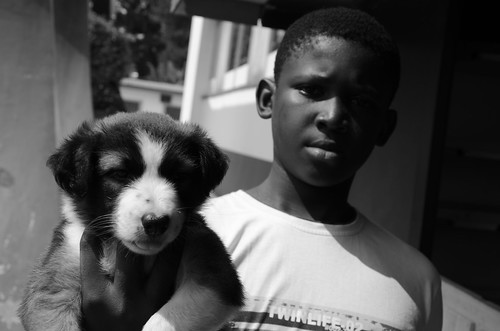 Un chiot monsieur? Brazzaville, Republic of Congo
