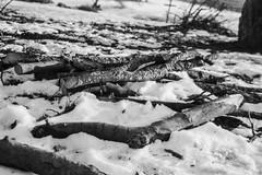 (janosh_) Tags: winter snow hungary pentax budapest fa excel normafa mz50 magyarorszg fomapan100 fomapan h fomadon scanjet3800 fomap