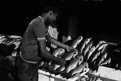 Fish Shop (murariks) Tags: blackandwhite india fish nikon bangalore nikonf100 ilfordhp5 35mmfilm karnataka fishmarket ilford analogphotography blackandwhitephotography filmphotography murari halmarket