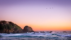 3 birds at sunrise (photo obsessed) Tags: park new wales point south australia potato national nsw newsouthwales oceania potatopoint 500px eurobodalla eurobodallanationalpark ifttt