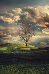 Spring is coming (aproudlove) Tags: sunset sky tree nature field grass clouds landscape outside outdoors europe alone republic czech natural bare branches hills land lonely solitary karlstejn lety republika 2015 ceska sonya6000