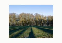 Lines of trees V (pascal lienard) Tags: trees tree lines architecture rural countryside empty champs vert symmetry arbres silence fields frontal miroir paysage campagne lignes vide emptyness verticality symetrie lineoftrees manmadelandscape contemporarylandscape paysagecontemporain altrparlhomme lignedarbre