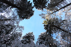 Winter is above (Rogg4n) Tags: blue trees winter white snow forest canon season landscape eos switzerland scenery suisse hills jura covered wald meringue canton neuchtel montain fort chauxdefonds crtes 18135mm 100d