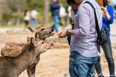 Nara Park / Nara, Japan (yameme) Tags: travel nature animal japan zeiss sony evil deer  alpha nara kansai    batis   mirrorless a6300 emount batis85mmf18