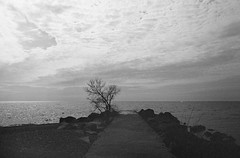 Beach Morning (Georgie_grrl) Tags: morning blackandwhite toronto ontario silhouette clouds explore pentaxk1000 thebeaches ilford400asa rikenon12828mm butnotasearlyastomorrowmorningwillbe