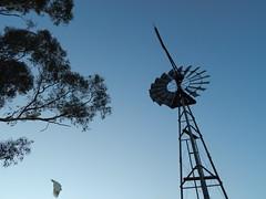 Southern Cross IZ 8 foot windmill, Jerrabomberra, NSW, Australia (sarracenia.flava) Tags: new windmill wales pattern cross south australia southern cockatoo iz jerrabomberra