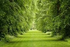 Green (cotswoldman) Tags: trees colour green landscape arboretum tunnel cotswolds gloucestershire westonbirt tetbury gloucestercameraclub