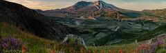 St. Helens Sunrise (Stephanie Sinclair) Tags: mountains sunrise volcano pano washingtonstate mtsthelens cascaderange nationalvolcanicmonument usdepartmentoftheinterior june2016 stephaniesinclairphotography findyourpark seattleempress
