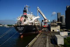 Nord Tokyo (DST_1114) (larry_antwerp) Tags: 9519200 nordtokyo scheldenatie cargill bulk antwerp antwerpen       port        belgium belgi          schip ship vessel