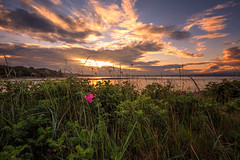 Wildflowers at Sunset (MilesGrayPhotography (AnimalsBeforeHumans)) Tags: uk flowers sunset sky sunlight beach water grass skyline canon reflections landscape outdoors photography eos golden evening scotland photo twilight edinburgh europe glow village nightscape britain dusk wide scenic wildflowers ef firthofforth waterscape 6d 1635 cramond f4l auldreekie nighfall cramondbeach canonef1635mmf4lisusm canon6d