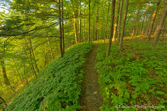 Foot Trail'n ... near Pyramid Point (Ken Scott) Tags: trees usa forest spring michigan may lakemichigan greatlakes trail hdr freshwater voted groundcover leelanau 2016 45thparallel kenscott sbdnl sleepingbeardunenationallakeshore mostbeautifulplaceinamerica kenscottphotography kenscottphotographycom