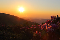 Rhododendron Sunset (i_am_durin) Tags: sunset bald northcarolina rhododendron roan northcarolinamountains canon24105f4 roundbald canon1635mmf28 roanhighlands durinsday canon6d janebald