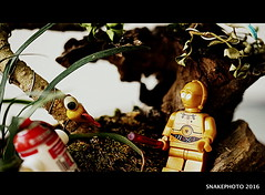 Stop talking to that bird R2 and get us out of here! (snakephoto) Tags: snakephoto lego star wars sony a7 industar 502 r2d2 c3po toys fun 12 inch extension tube