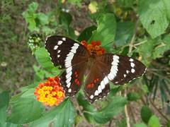 Mariposa (Esteban 507) Tags: naturaleza flores flower nature gardens butterfly jardin mariposa