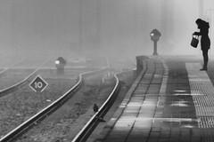 bird on the tracks (IcarusBlue) Tags: rainyday 10 platform puddles whatsinthebag