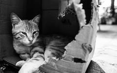 IMG_7045.JPG (esintu) Tags: cat stray street istanbul kuzguncuk kedi box sleep sleepy
