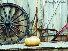 Farm Equipment (Amy Helina) Tags: fall texture pumpkin farm wagonwheel autmn farmequipmemt