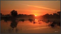 Summer Sunrise. (Picture post.) Tags: trees sun mist green nature water sunrise reflections reeds landscape interestingness eau summertime paysage arbre goldenhour brume sedge widfowl