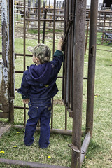 Checking the chutes before branding (mikefromsundre) Tags: ranch canada cattle alberta bluejeans branding wranglerjeans littlecowboy