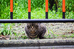 Today's Cat@2016-06-17 (masatsu) Tags: cat pentax catspotting mx1 thebiggestgroupwithonlycats