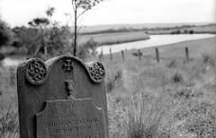 Alberton Cemetery, B+W 1970ss- sheet 165 09 (Graeme Butler) Tags: landscape heritage graves cemeteries victoria australia
