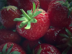 the sweetness of summer (***toile filante***) Tags: red green rot colors fruits colorful strawberries grn erdbeeren frchte