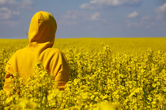 Camouflage (C_MC_FL) Tags: blue summer sky woman plant nature field yellow canon landscape person photography eos austria sterreich fotografie sommer horizon natur pflanze feld himmel gelb hood blau frau tamron landschaft raps horizont pullover canola rapeseed rapsfeld kapuze 18270 60d b008