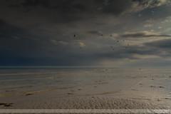It's on its Way III (go18lf2004) Tags: worthing beach shoreline tide waves sea serenity serene calming mood atmospheric light gulls sky sussex seaside flight formation horizon storm weather forecast