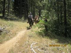 Horse on Chico Ravine Trail - Laguna 6-26-16 a (Bob_ Perry) Tags: laguna mtlaguna mountlaguna lasgatos losgatos chicoravine lmva lmra lagunamountainrecreation clevelandnationalforest lagunamedow