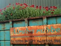 Poppies (NJKent) Tags: factory turquoise derbyshire poppies skip saveearth