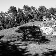 l'ombre de la fort (zventure,) Tags: blackandwhite france nature monochrome noiretblanc crpuscule fort bois carr cailloux alpesmaritimes buissons pinsparasol zventure