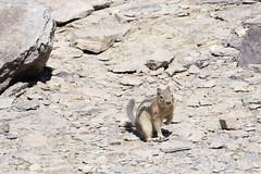 DSC_0623 (J F Wolford) Tags: park canada wildlife national alberta banff morainelake