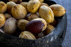 Buriti (Rita Barreto) Tags: flora natureza fruta gastronomia amazonas buriti amaznia alimentao miriti mauritiaflexuosa uarini alimentoenergtico ricoemvitaminac artesanadadasfolhas fibradeburiti sucosesorvetesdeburiti