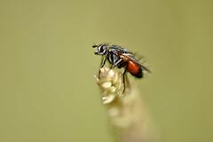 Red Bug (JCRM6) Tags: bug insect bokeh stillife closeup macro