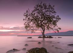 "Alor (sandilesmana28) Tags: sun tree beach water sunrise landscape island ngc alor ""pentaxflickraward"""
