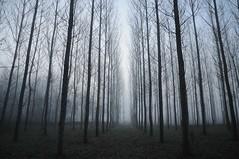 Forest (Jordi sureda) Tags: trees nature forest nikon natura arbres fotografia niebla foggyforest