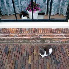 Inside and outside cat (Michiel2005) Tags: holland netherlands animal cat leiden kat nederland dier poes raam raamkozijn